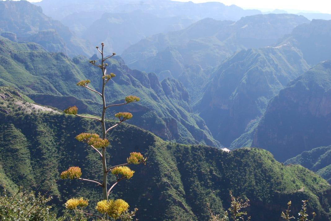 View Zip Line Copper Canyon Adventure Park
